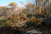 Terrains boisés, Domaine McGill