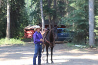 Horse HorsemanShip and Riding Lessons and Training