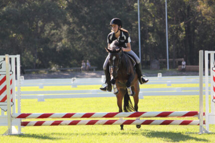 Great Competition Pony Ingleside Warringah Area Preview