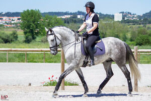 Looking for Professional English Trainer // Advanced Rider