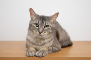 Astro is now available for adoption at paulmac's pet store