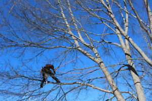 Tree Pruning/Removal