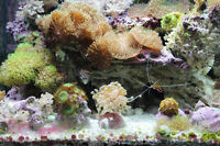Three saltwater aquariums with corals, fish, lights, filters...