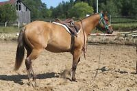 3 year old Dun Registered Appaloosa Mare