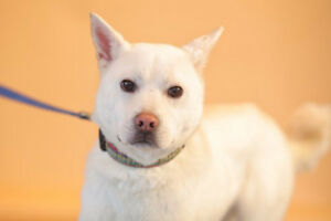 Lalla is looking for new home asap!!