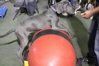 Dog training classes at Pet-D-Gree