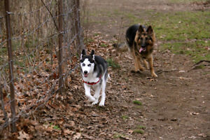 Dog Walking: High Park / Bloor West / Junction /Etobicoke