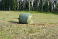 Timothy/Brom Hay For Sale 5X5 Round Bales