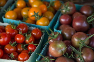 CSA Vegetable Shares Delivered to Guelph and Mount Forest !