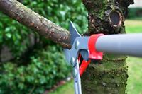 Tree Trimming / Shrub Pruning and Yard Clean Up Services