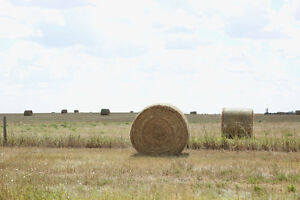 Grass Alfalfa Large Round Hay Bales for Sale