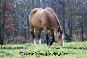 Pension extérieur chevaux