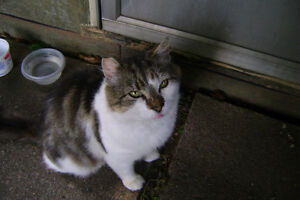 Looking for a furever home for 3-4 yr old cat