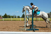 Hunter/Jumper for sale - Finnegan