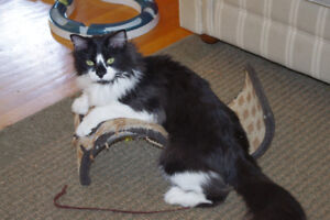 UPDATE: Lost Cat - Whitmore Park