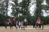 Horseback riding lessons beginners to advanced ride year round!