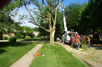 Tree Cutting and Removal.