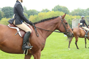 Looking for a second rider for my mare Kitchener / Waterloo Kitchener Area image 5