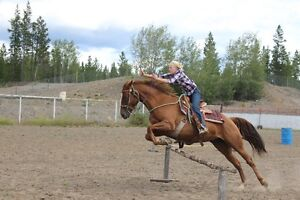Registered Quarter Horse mare Williams Lake Cariboo Area image 2