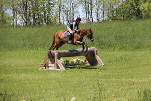 Jumper/Eventer Available for Partboard