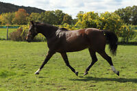Horse Boarding available in Niagara on the Lake
