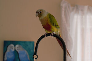 Responsible bird & pet-sitting or boarding services: Barrie