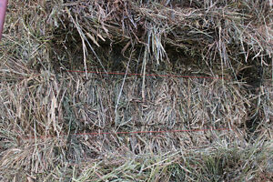 2nd Cut Hay Bales For sale