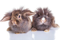 Dust Bunnies?? Now is the perfect time to book your fall clean!!