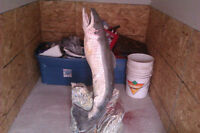 BEAUTIFUL HAND CARVED WOOD NEW BRUNSWICK SALMON SCULPTURE