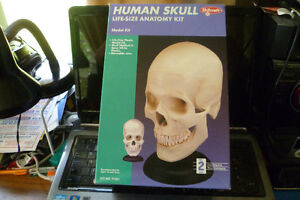 Life size Anatomy Kit...Skull