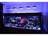 Aquarium with free cabinet and sump