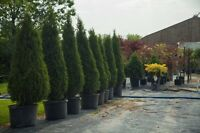 Fall Sale of Trees and Shrubs at Greenview Nursery.