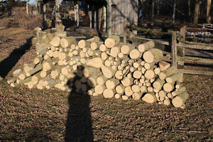 Dry Firewood Peterborough Peterborough Area image 1