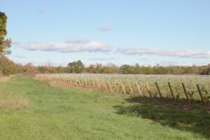 Business opportunity Vineyard looking for investors