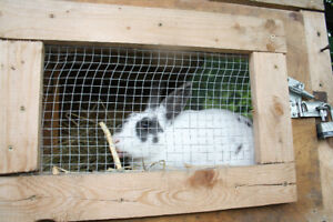 3 beautiful rabbits and their nice hutches