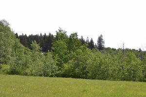 Beautiful 50 acres overlooking Big Lake Williams Lake Cariboo Area image 6