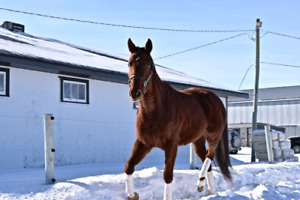 Ella aka Quest For Stars 2013 off the track thoroughbred mare.