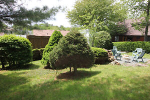 Backyard on greenbelt with pool - Cottage in the City!