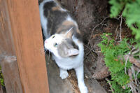 Found Calico Cat in Oak Bay