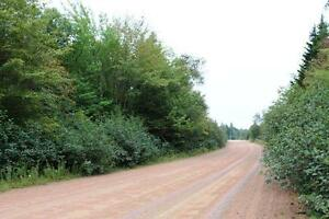 61.5 acres WATERFRONT New Brunswick! For sale/trade! Oceanfront! Kingston Kingston Area image 5
