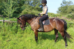 Horse for Sale - Lily - 3 year old Friesian cross filly