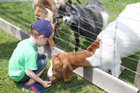 Mobile Petting Zoo! That comes to you! Great for Birthday Partys