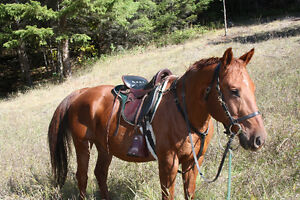 Tucker Saddle - Hours of riding comfort for you and your horse!