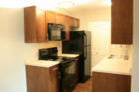 Beautiful Renovated 1 Bedroom Townhome with Carport