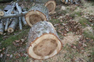 Free wood available
