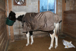 "*Priced Reduced* Winter Horse Blankets (One 57"" and one 69"")"