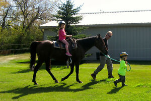Short-term horse boarding close to the city