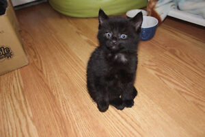 Kitten: Looking for good home