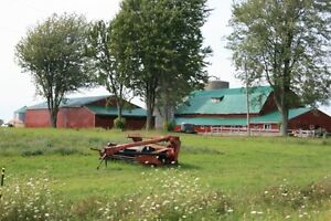 50 Acre farm. 125K DOWN 1,900.00 PER MONTH Kitchener / Waterloo Kitchener Area image 2