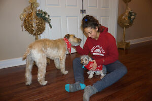 Professional Family Style, In-Home Dog Sitting Service London Ontario image 3